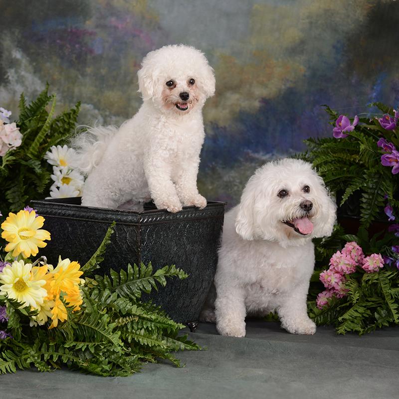 Charleen's Portrait Studio - Pet Portraits